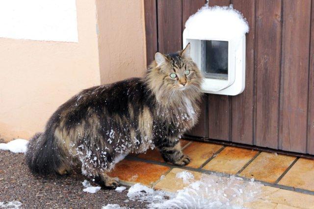 Katzenklappe in Tür einbauen