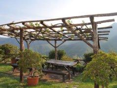 Weinlaube bauen