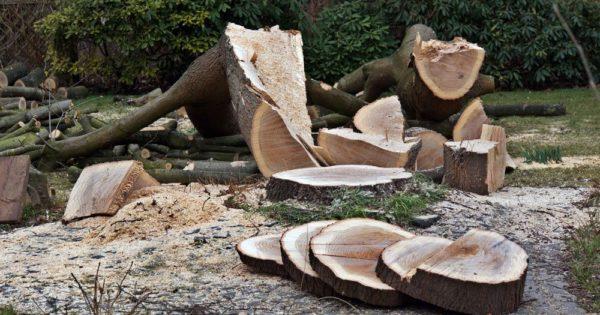 Tisch aus einer Baumscheibe bauen