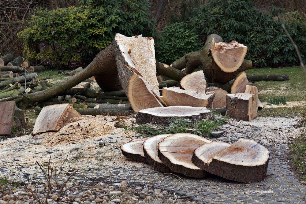 Tisch Aus Einer Baumscheibe Bauen Heimwerkertricks Net