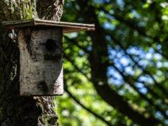 Vogelhaus aus Baumstamm Anleitung