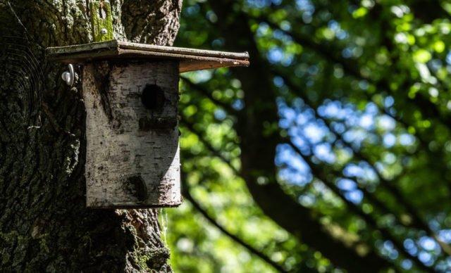Vogelhaus Aus Baumstamm Bauen Anleitung Tipps Heimwerkertricks Net
