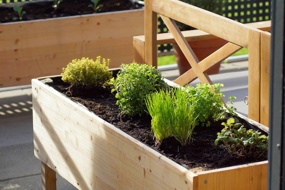 Hochbeet auf dem Balkon bepflanzt mit Kräutern