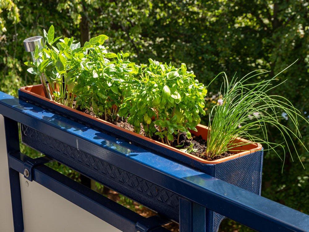 Kräuter im Balkonkasten