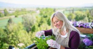Frau erntet Kräuter auf dem Balkon