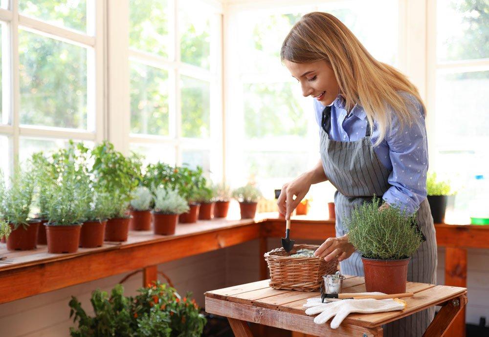 Frau pflanzt Kräuter